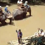 Chiang Mai Elephant Safari Ox-cart Ride and Bamboo Rafting Tour