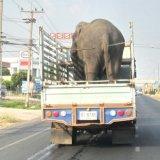 Thai people are bad drivers